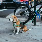 Comment faire du vélo avec son chien?